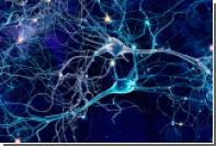 На мини-мозге испытали психоделики