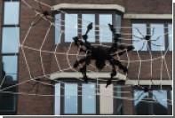 Раскрыта главная причина боязни пауков