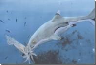 Найден умерший от переедания «рыбоящер»