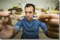 Антропологи нашли кости гигантских крыс