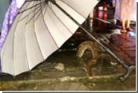 Толстый трехметровый питон застрял в канализационном люке посреди города