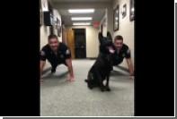 Полицейский пес поотжимался под саундтрек к «Рокки»