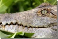 Крокодил съел рабочего в Малайзии