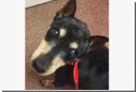 Американку обвинили в жестокости к животным за спасение собаки от эвтаназии