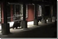 Полицейские помешали медведям полакомиться мексиканской едой