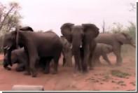 Слоны припугнули туристов на сафари в ЮАР