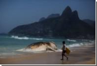 На бразильский берег выбросило 30-тонного кита