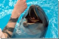 «Роснефть» профинансирует изучение дельфинов