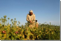 Производство опиумного мака в Афганистане достигло нового рекорда