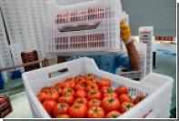 Турецкие помидоры попали в Россию