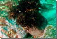 Морской огурец спасет россиян от рака