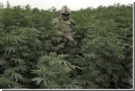 Зафиксирована первая в мире смерть от передозировки марихуаны