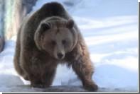 Первые обломки «Союза-2.1б» нашел медведь
