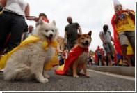 Ученые определили влияние собак на здоровье людей