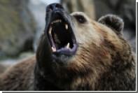 Канадский хоккеист не увидел медведей в Новосибирске и загрустил
