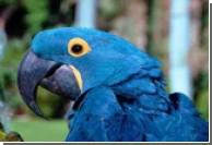 Американка потратила около 75 тысяч долларов на лечение попугайчика, у которого в феврале прошлого года был...