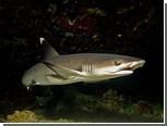 В Египте поймали покусавшую россиян акулу