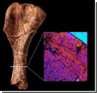 Найдены кости одного из самых первых динозавров