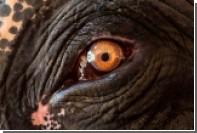 Взбесившиеся слоны в Таиланде убили одного туриста и напугали других