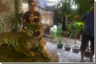 Тигра избили палкой ради туристов