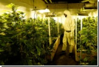 Полицейский насмотрелся сериалов и обзавелся тайными плантациями с марихуаной