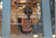 Датские зоопарки попросили приносить домашних животных на корм львам