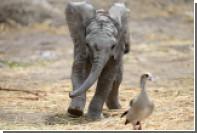 Суд отказал слонам в праве быть личностями