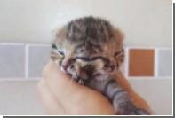 Котенка с двумя носами и тремя глазами выходили в Африке