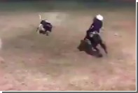 Бык поднял на рога лошадь и наездника на родео в Мексике