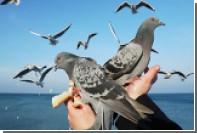 Британку оштрафовали за кормление голубей