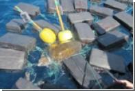 Моряки спасли застрявшую в 800 килограммах кокаина черепаху