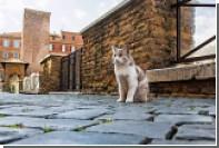 Деревню для котиков построят в Турции