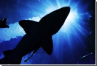 Тигровая акула убила американку у острова Кокос