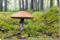 Во Франции нашли радиоактивные российские грибы