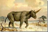Найден последний казахский единорог