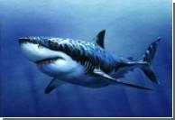 Австралийский ныряльщик избил акулу-людоеда