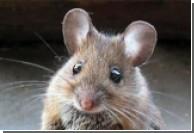 В Китае мыши задержали вылет американского самолета