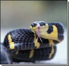 Крупную партию наркотиков на вилле охраняли ядовитые змеи
