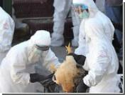 В Китае от птичьего гриппа умер третий человек за месяц