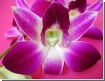5 февраля в Таиланде пройдет Фестиваль цветов[x] / В провинции Чиангмай цветут орхидеи