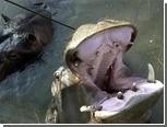 Из частного зоопарка в Черногории сбежал бегемот