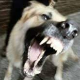 Бродячие собаки загрызли редких животных в зоопарке