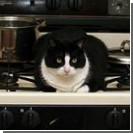 Кошка устроила пожар в квартире