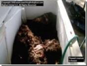 В США в мусорном баке нашли обгоревший труп модели журнала Playboy