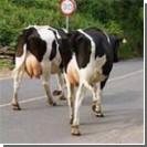 Фермер застрелил 51 корову, а потом - себя