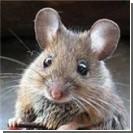 Мыши захватили полицейский участок