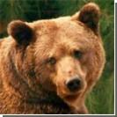 Украинским медведям не дают убежать за польскую границу