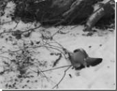 Новый случай массовой гибели птиц отмечен в Канаде