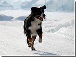 Канадцы пообещали назвать ребенка в честь спасителя своего пса