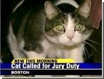 Кота обязали явиться на судебное заседание